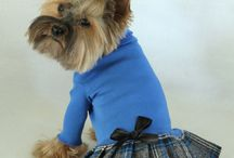 Fall Dog Clothes / Great comfortable dog clothes for the fall and cooler months.