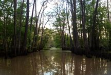 On the Bayou!