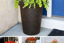 Bejárathoz növények