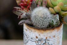 Izbove rastliny