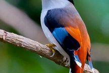Birds <3