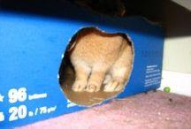 Rabbit boredom breakers
