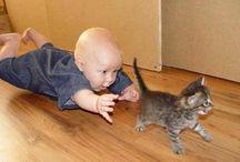 Kittens / kittens