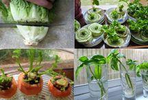 Garden / Tips para que tu huerta este optima.