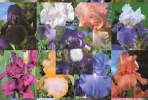 Flowers / by Renae Brazzoni