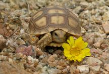 Baby Desert Critters / by Tanque Verde Ranch