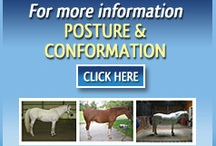 POSTURE IS THE LANGUAGE OF THE HORSE