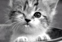 cutest ever seen