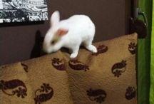 Bunnies ☆