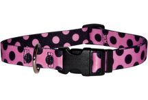 Cat Collars, Harnesses and Leashes