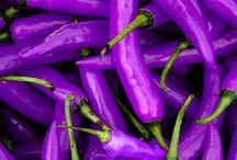Chilli Purple