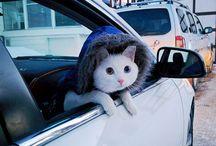 #caturday / #caturday