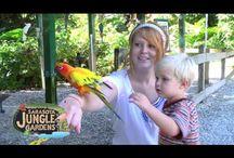 Sarasota Jungle Gardens Videos