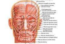 Odontologia Desenho