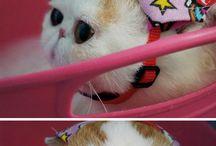 SNOOPY ^_^ || chubby & cute