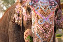 india / by Tailee