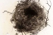 NEST- BIRDS