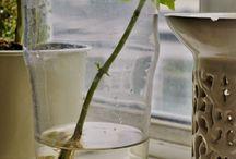 Cultivo de plantas para la cocina