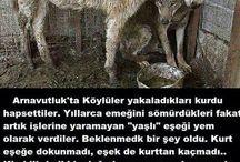 hayvancıklarımız