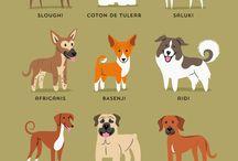 Coton VS dogs  / Fordi jeg elsker hunde