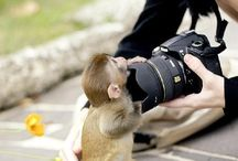 i always wanted a helper monkey