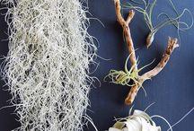 Tillandsias, Terrariums, indoor plants I might not kill