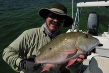 SNAPPER / Fly fishing for snapper.  Snapper on the fly.