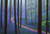 Forest and Landscapes