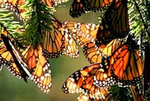 SO BEAUTIFUL BUTTERFLIES