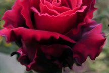 Milované květinky