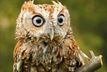 Life as an Owl / by Renee Taylor