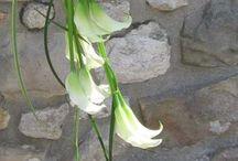 Kreasi Bunga Tangan
