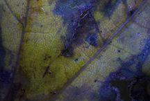 Herfstbladeren. / Dichtbij of microfotografie van herfstbladeren.
