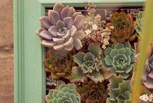 garden / by Kylie schlesener