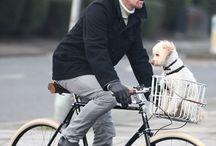 Dogs on Bikes (nice 'n safe)