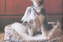 Miniature Schnauzer / The life and times of Panda, a miniature schnauzer from St-evenage