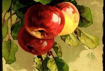 fruit&flowers painting