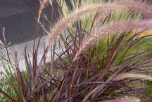 heinät ja ruohot
