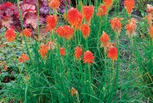 Perennials / Perennial plants return year after year and continue growing until they reach maturity, which varies by plant but averages three to five years. Some plants that are perennials in their native region may be considered annuals in other regions.