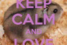 hamster/hamster stuff