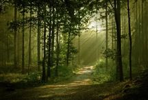 forest / nice forest
