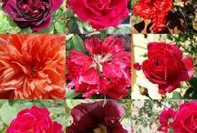 Couleur : Rouge / Décoration, nature,  objets : rouge