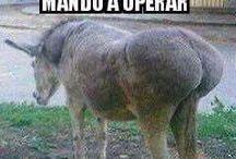RISAS Y ALGO MAS