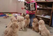 Puppies kindergarten