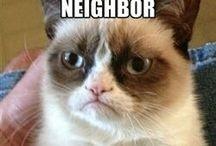 Grumpy Cat Greatness