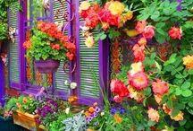 clourfull garden
