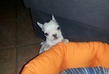 lola, la mia cagnolina