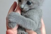 Katzen Baybys