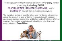 essential oil receipes