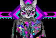 Cats for Sergiu